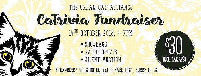 CaTrivia Fundraiser - a fun feline fact event - Experience Sydney