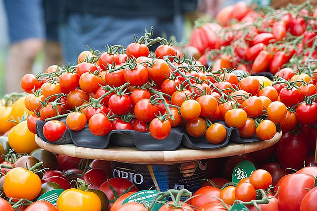 Tomato Festival Sydney Returns to The Royal Botanic Garden Sydney
