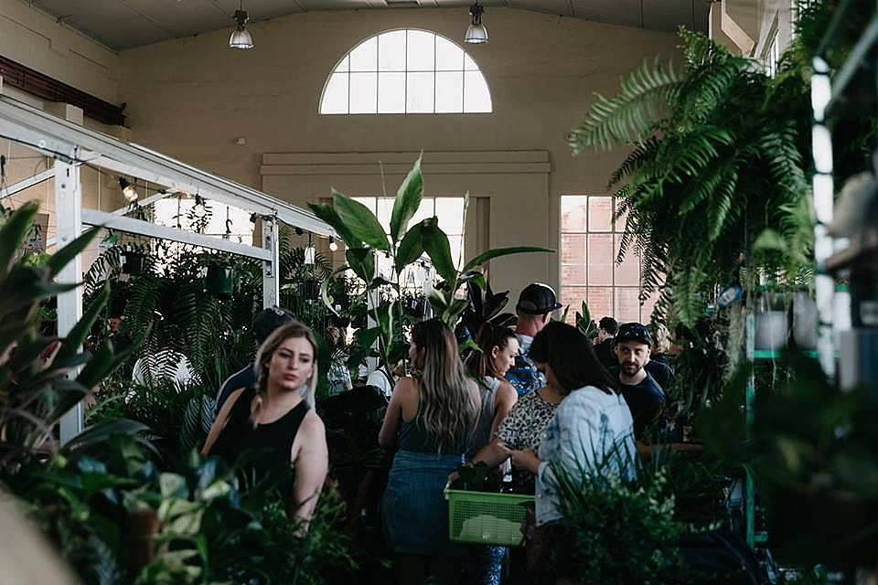 Indoor Plant Jungle Party Invades Australia!